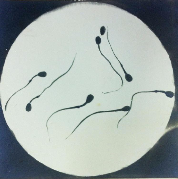 Ivanov_Spermatozoa study